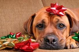 Training Your Dog for the Holidays
